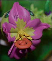 Palmons Blume in der Detailaufnahme